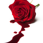 Bleeding Rose